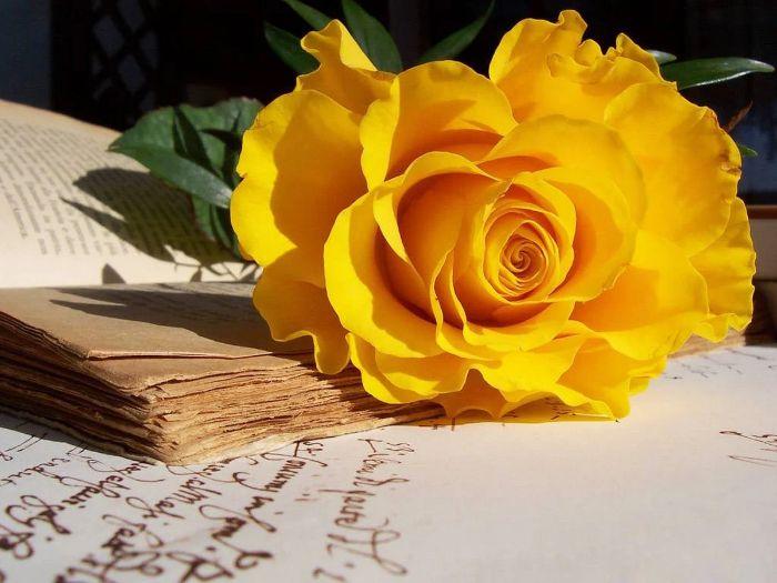 Hoa hồng vàng thể hiện cho nỗi buồn và sự chia ly