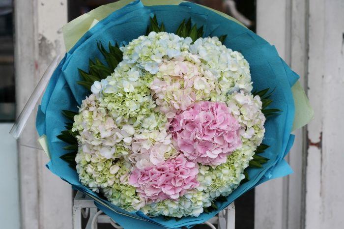 Hoa cẩm tú cầu là một trong những loại hoa dành tặng khai trương