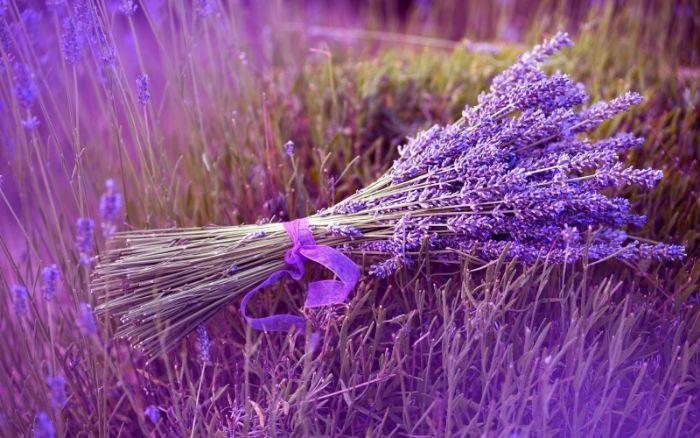 Hoa oải hương tượng trưng cho tình yêu thủy chung