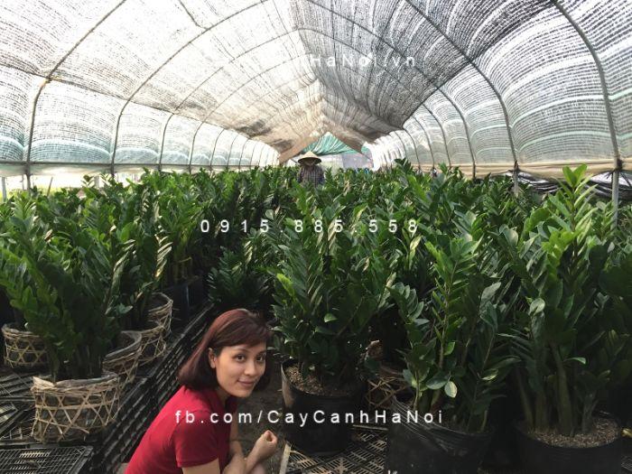 Cây Cảnh Hà Nội cung cấp đa dạng giống cây với mức giá thành hợp lý
