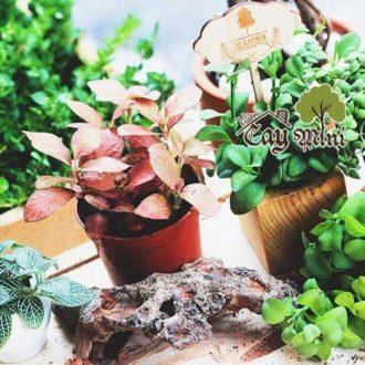 Vườn Cây Mini là một trong những địa chỉ uy tín nhất cung cấp cây cảnh