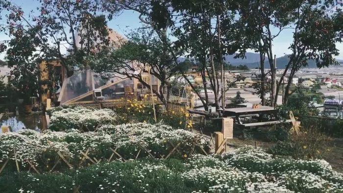Cafe túi mơ to nổi bật với khu vườn đầy hoa cúc họa mi trắng